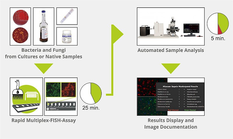 New MetaSystems Application: Rapid Pathogen Identification (RPI)